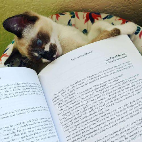 bards sages quarterly, bemo cat, bemo, kitten, magazine, rebecca gomez farrell, she could be me, cat reading
