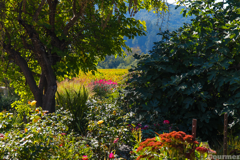 wine road, sonoma county, winter wineland, gardens, david coffaro, coffaro wine, coffaro estates, wine travel