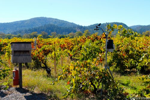 winter wineland, wine road, david coffaro, sonoma county, winery, winery visit