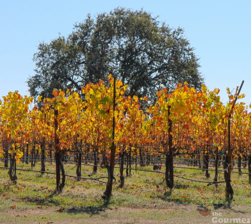 wine road, sonoma, sonoma county, lauterbach cellars, wine, tasting room, vineyard, jackrabbit